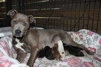 Lacey, one-year-old foster dog, becomes a foster mom to 16 puppies