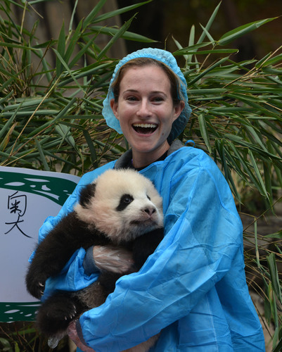 Rebecca Ravich, a Chengdu Pambassador finalist from Los Angeles announces the name of a 3-month old baby panda born on the opening day of the London Olympics, Oreo, at Chengdu Panda Base in Chengdu, China.  (PRNewsFoto/Chengdu Panda Base)