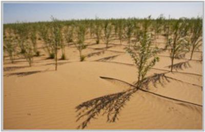 Irrigation in the Ulan Buh Desert.  (PRNewsFoto/Kee Global Advisors (KGA))