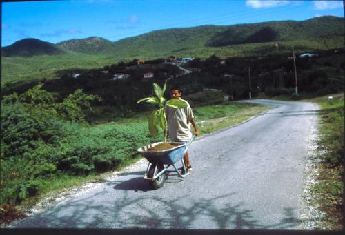 Wilfredo Prieto, Walk, 2000. Ornamental plant, soil, and wheelbarrow, overall dimensions variable. Solomon R. ...