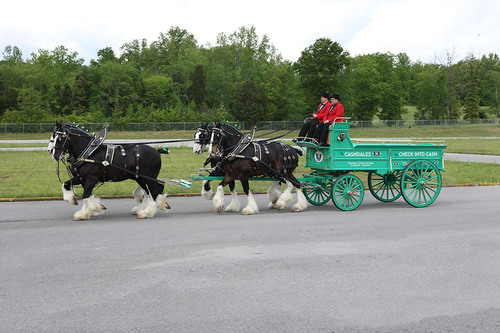 The Cashdale Clydesdales.  (PRNewsFoto/Check Into Cash)