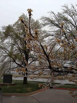 Ice storms in Wichita, KS.  (PRNewsFoto/ACME AtronOmatic)
