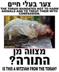 The Torah mandates not to harm animals and to treat them with compassion. Is this a mitzvah from the Torah? (PRNewsFoto/United Poultry Concerns) (PRNewsFoto/Alliance to End Chickens as ...)