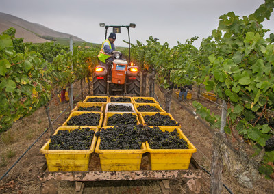 The 2015 California winegrape harvest was early, light and of exceptional quality. Source: Wine Institute. Photo by George Rose.