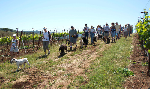 Hikers and furry companions tour 1,850-acre Kunde Family Estate in Sonoma Valley, California.  ...