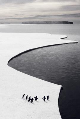 Penguins in Antarctica's Southern Ocean.