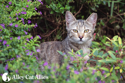 Alley Cat Allies marks Earth Day 2016 by celebrating the role of cats in the environment. Visit www.alleycat.org to learn about how Trap-Neuter-Return can help cats become great neighbors.