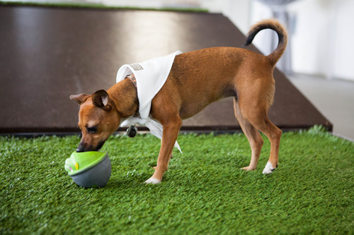 Dogs play at Pooch Hotel in West L.A.  (PRNewsFoto/Pooch Hotel)
