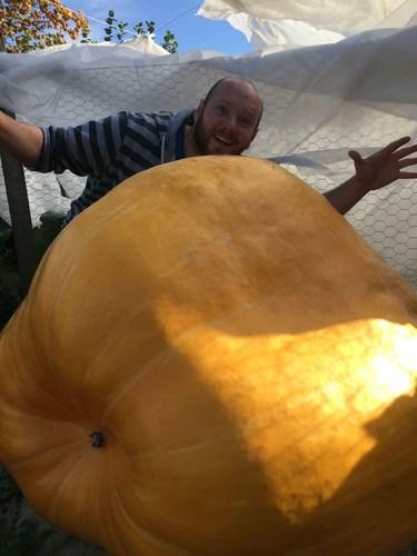 Biggest Pumpkin in Britain Set for Halloween Harvest (PRNewsFoto/Gardening Express)