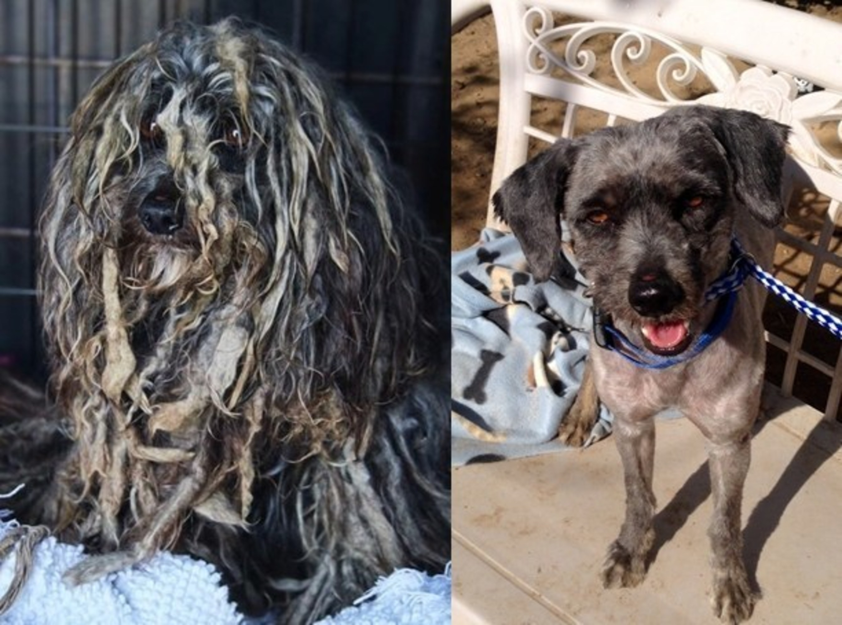 Bob Marley was aptly named for his dreadlocked appearance, but while the look worked for the musician, this pup was uncomfortably miserable - and homeless. Thanks to some much needed grooming and TLC, Bob's new clean-cut appearance has given him a new outlook on life, and the title of America's top doggie makeover in the 2015 Dirty Dogs Contest.