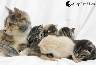 "Millions of kittens are born each spring during ""kitten season""--it's up to us to help them get the care they need. Visit www.alleycat.org/Kittens for a comprehensive guide to caring for kittens."