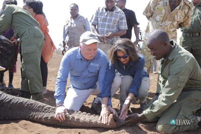 KWS and IFAW track elephants in Kenya to gather elephant's eye view