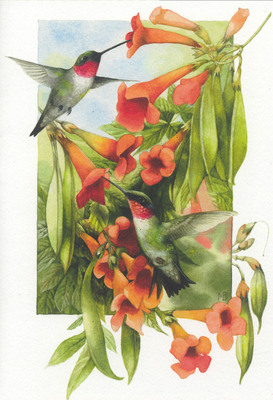 Marjolein Bastin's vibrant illustrations of nature's beauty have charmed Hallmark card-senders for more than 20 years.  (PRNewsFoto/Hallmark Cards, Inc.)