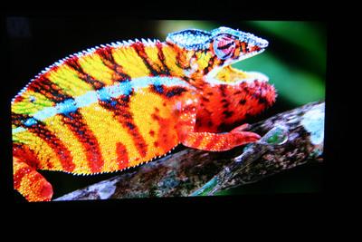 The Sony 4K UHD OLED TV.  (PRNewsFoto/CEAG Inc.)