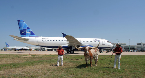 BEVO's Birthday Bonanza: JetBlue Airways Salutes the University of Texas Mascot's 95th Birthday