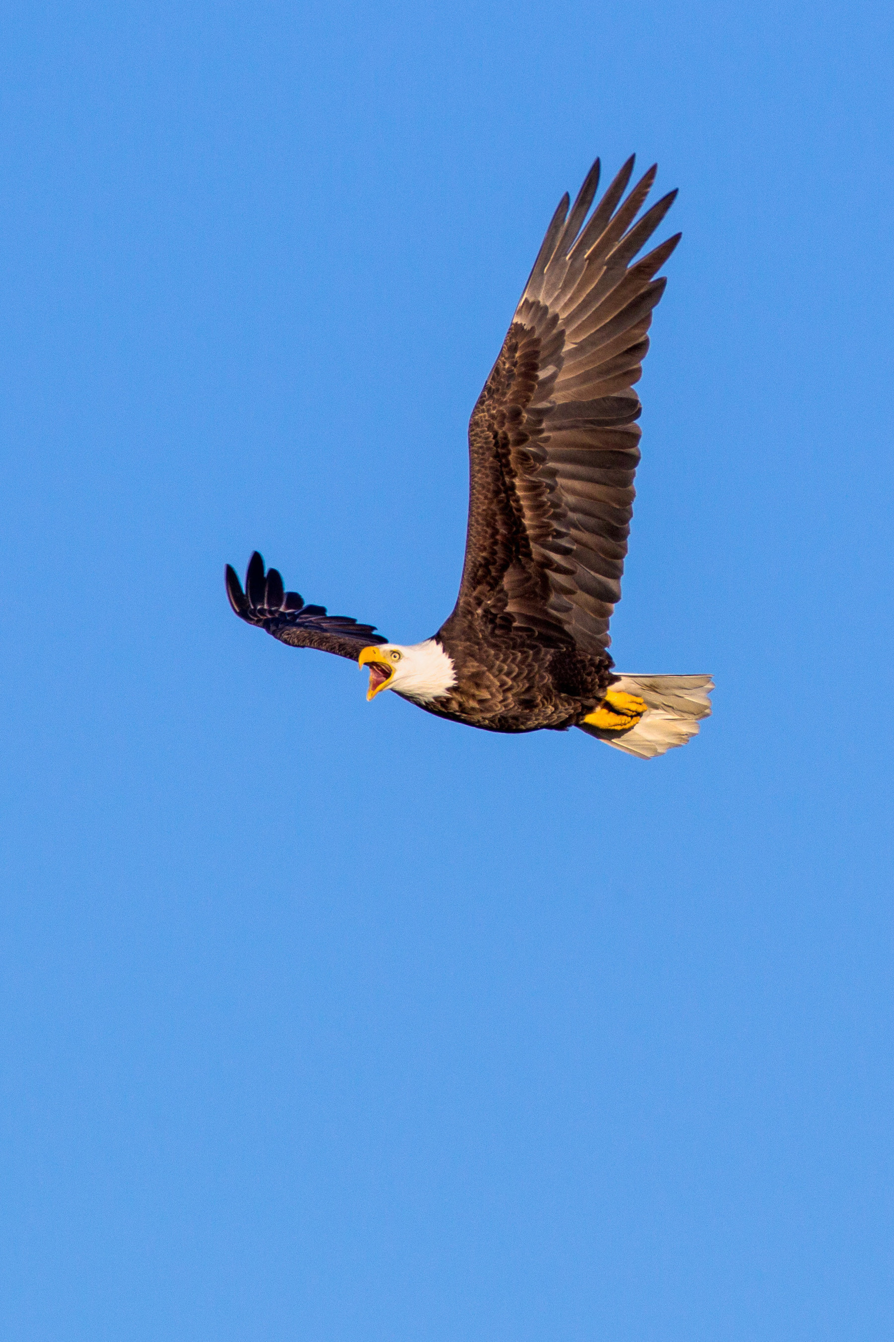 A pair of nesting bald eagles return regularly to the Ranch, and are just one of the many species of animals thriving there.