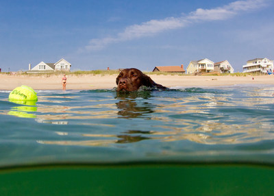 The Outer Banks of North Carolina have been recognized for pet-friendly beaches and accommodations. Photo credit: Matt Lusk Photography