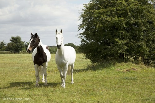Mull (left) and Kilsyth (right) (PRNewsFoto/The Horse Trust)
