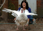 Karen Davis and Florence the Turkey (2000-2006). Photo by John H. Sheally, The Virginian-Pilot, November 25, 2004 (Thanksgiving Day).  (PRNewsFoto/United Poultry Concerns)