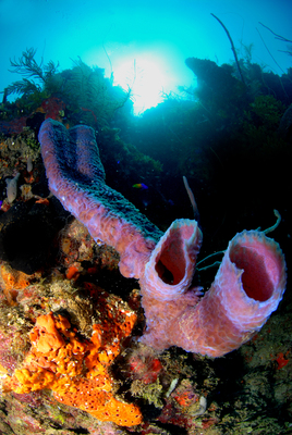 Coral Reef in Roatan, Bay Islands. Photo by: PMAIB, IHT. (PRNewsFoto/Honduran National Chamber of...)