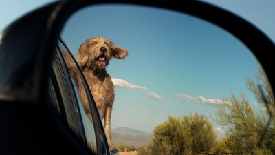 """""""True Love"""" celebrates the longtime relationship that exists between dogs and cars"""