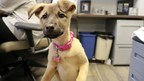 """Petco announces """"National Pets @ Work Day"""" to raise awareness of the mutual benefits of having pets at work."""