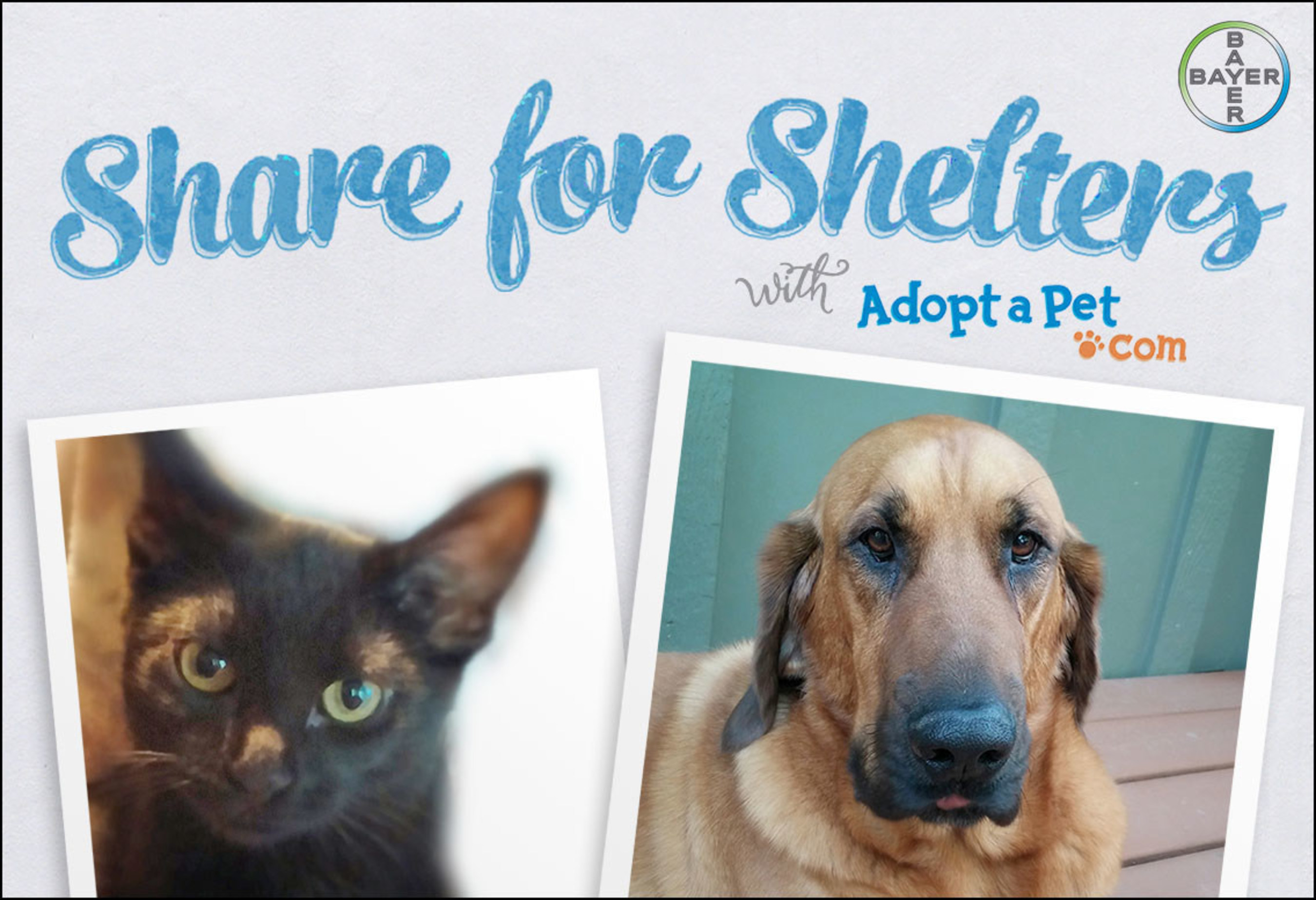 Between now and the end of 2015, for every pet photo uploaded to www.ShareForShelters.com or shared across your social channels using #ShareForShelters, Bayer will provide products valued up to $20,000 to Adopt-a-Pet.com
