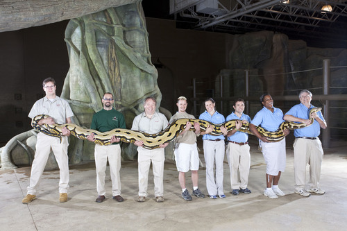 "Fluffy, a reticulated python, is the ""Longest Snake"" from the Guinness World Records 2011 book. She is 24 feet long and lives at the Columbus Zoo and Aquarium in Powell, OH. Photo Credit: Richard Bradbury/Guinness World Records. (PRNewsFoto/Guinness World Records, Richard Bradbury)"