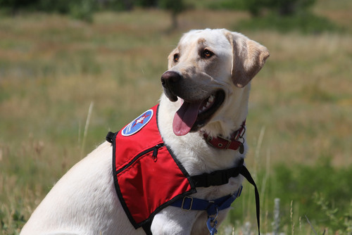 "CAMP BOW WOW LAUNCHES ""SCOUT'S ANGELS"" INITIATIVE IN THE NEWTOWN, CONNECTICUT COMMUNITY.  ..."