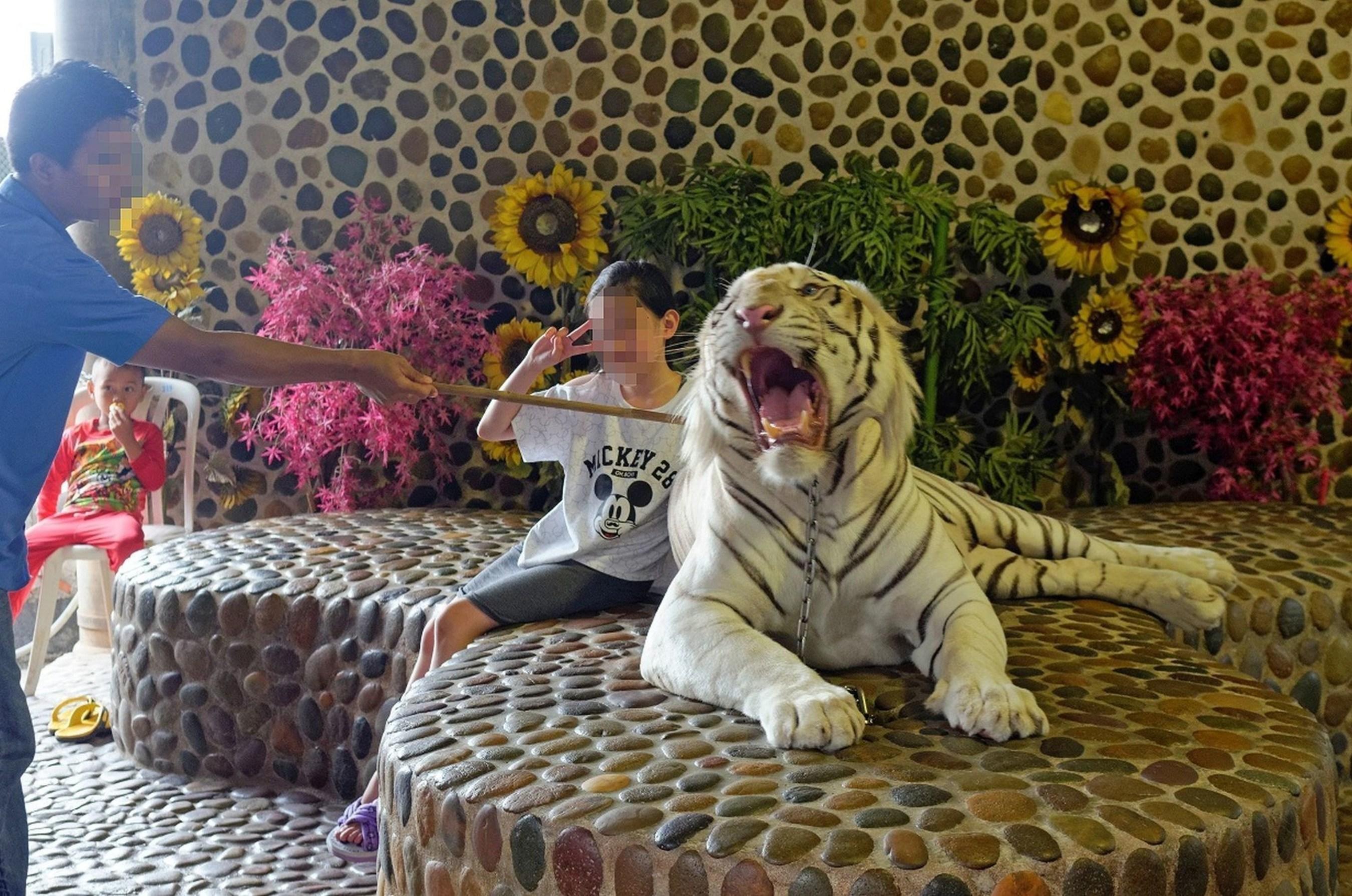 Sriracha Tiger Zoo, Thailand - Copyright World Animal Protection (PRNewsFoto/World Animal Protection)