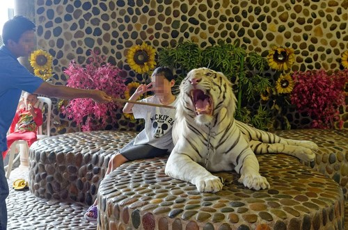 Sriracha Tiger Zoo, Thailand - Copyright World Animal Protection (PRNewsFoto/World Animal Protection)