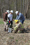 CONSOL employees plant trees at a Marcellus Shale gas well pad.  (PRNewsFoto/CONSOL Energy)