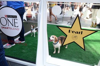 Adoptable dogs from the spcaLA await their turn on the red carpet at an adoption event hosted by Purina ONE in Los Angeles on Aug. 8, 2015. The event was part of the ONE difference campaign, which celebrates the people and shelters dedicated to making a positive difference in the lives of dogs.