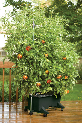 This self-watering planter recently received the Member Tested and Recommended Seal of Approval from the National Home Gardening Club. The club consists of 400,000 gardeners who have the opportunity to test and rate gardening products. Both the EarthBox and EarthBox Junior gardening systems were top-rated for convenience, ease of use, quality and design. (PRNewsFoto/EarthBox) (PRNewsFoto/EARTHBOX)