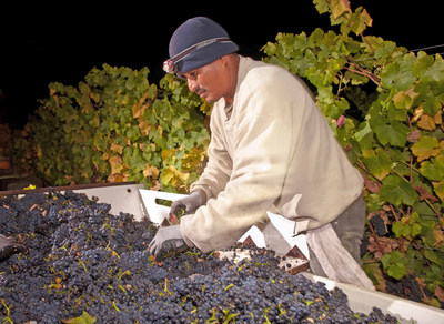 The 2016 California wine harvest is of exceptional quality, thanks to rains last winter and a relatively even growing season.