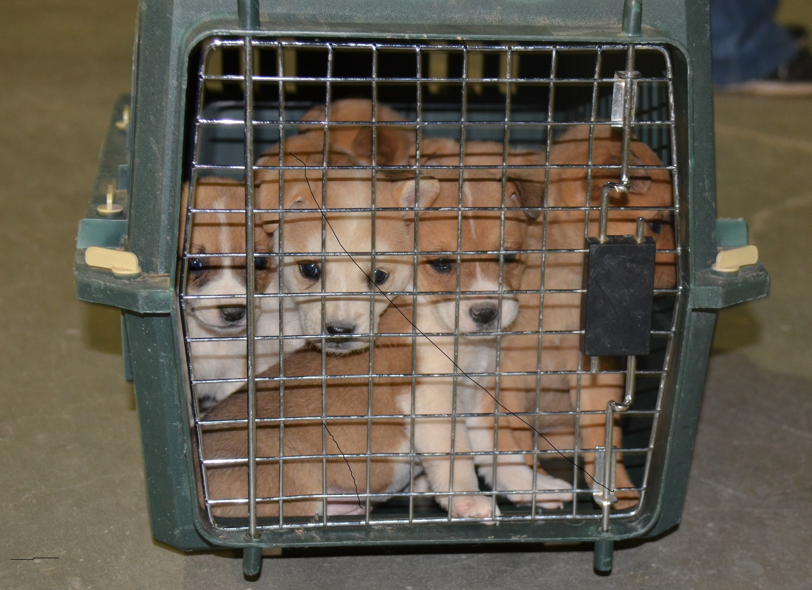 Minimal access to veterinary care has led to an overpopulation of dogs which in turn harms animal health and welfare, public health and the human animal bond.