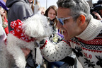 Andy Cohen greets a dog during the 2014 Beggin' Pet Parade in St. Louis on 2/23.  (PRNewsFoto/Nestle Purina PetCare Company)