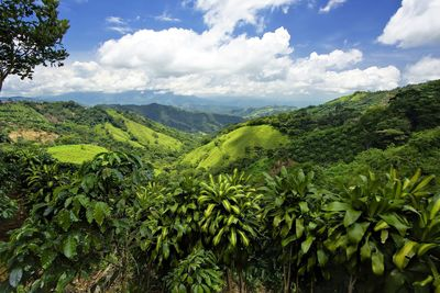 The Gold Route takes inspiration from the journeys made by the Walker family and their agents through the Americas  Pictured is a jungle in Costa Rica.
