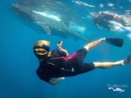 This is SO FUN! (PRNewsFoto/Cancun Whale Shark Tours)