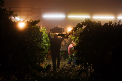 2014 California Winegrape Harvest: Earliest and Third in a String of Great Vintages this Decade