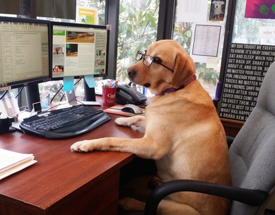 What Day Is Bring Your Dog To Work Day