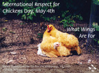 International Respect for Chickens Day, May 4th - What Wings Are For.  (PRNewsFoto/United Poultry Concerns)