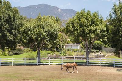 Oprah Winfrey buys Seamair Horse Farm at Auction, $28.85 Million