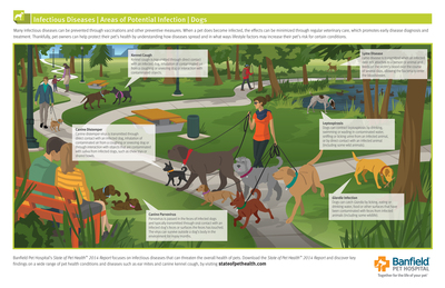 Infectious Diseases in Dogs, Areas of Potential Infection – Banfield Pet Hospital's State of Pet Health(TM) 2014 Report focuses on infectious diseases that can threaten the overall health of pets. Download the State of Pet Health(TM) 2014 Report and discover key findings on a wide range of pet health conditions and diseases such as Lyme disease and canine parvovirus, by visiting stateofpethealth.com. (PRNewsFoto/Banfield Pet Hospital)