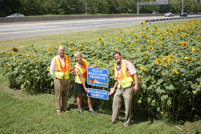 Standing with sunflowers on the side of North Carolina's I-85, planted in collaboration with the North Carolina Department of Transportation.