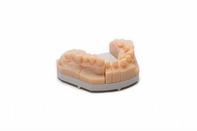 Dental model designed using exocad Model Creator software and produced on a Stratasys Objet Eden260V 3D Printer