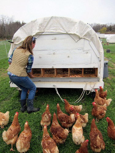 Chris and Holly Browder, the owners of Browder's Birds Pastured Poultry Farm located on Long Island, NY, ...