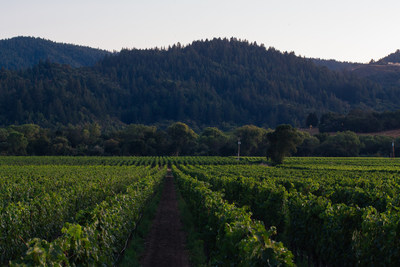 Seghesio Family Vineyards' Cortina Vineyard in Dry Creek Valley