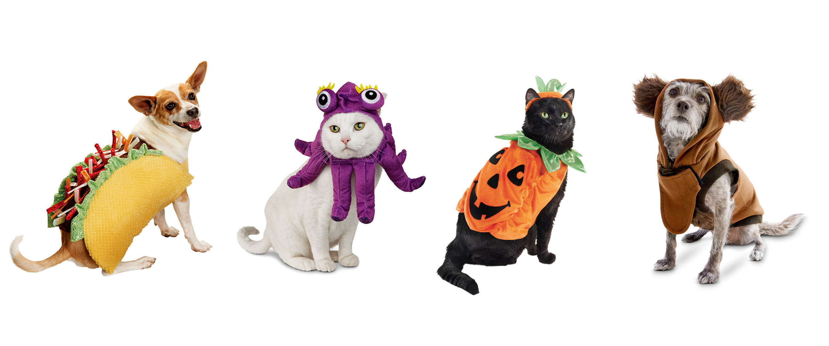 petco celebrates halloween with a new lineup of costumes and events