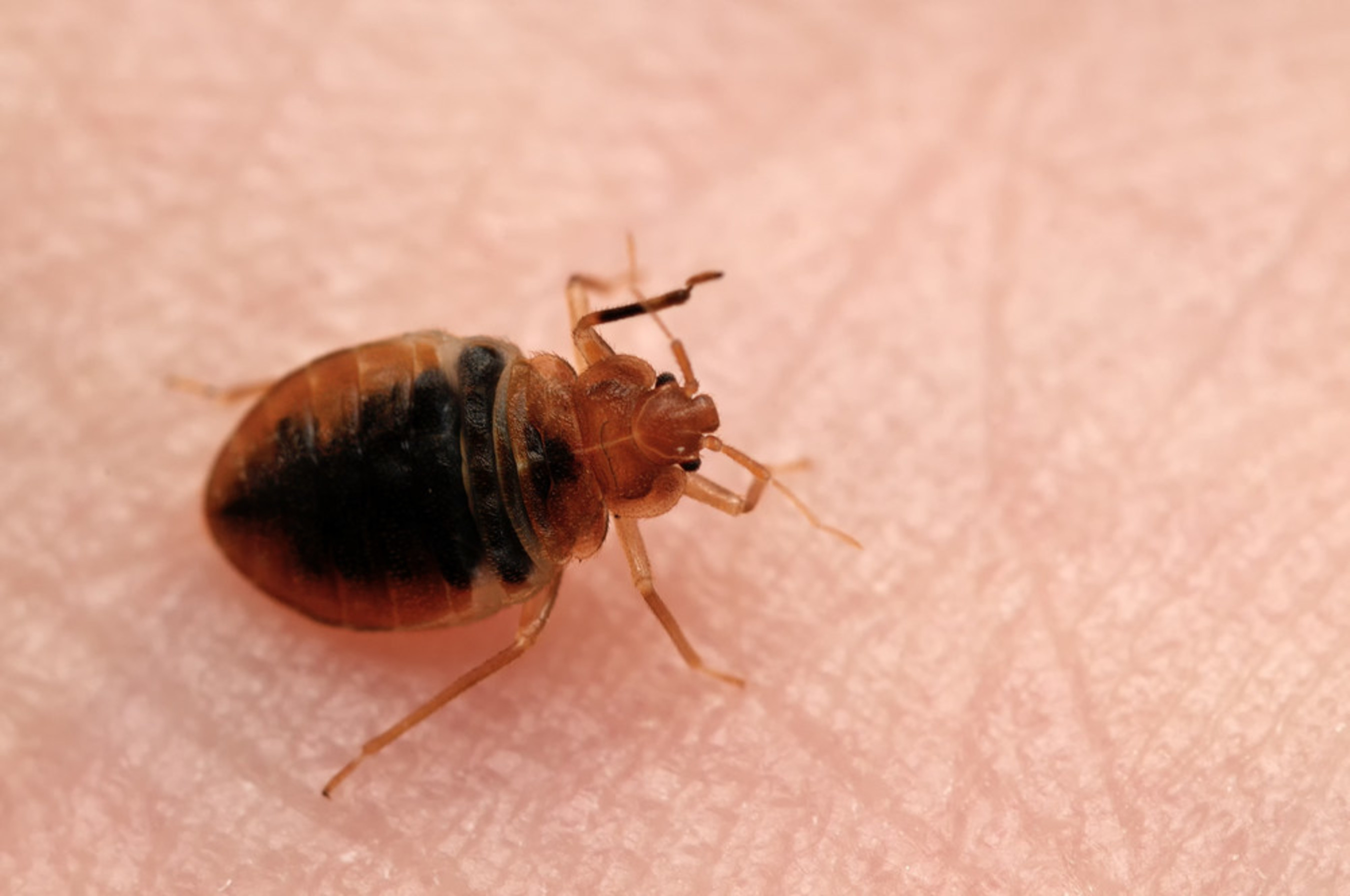 Seattle Homeless Starting to Prefer Parks to Shelters Thanks to Bed Bug Issues